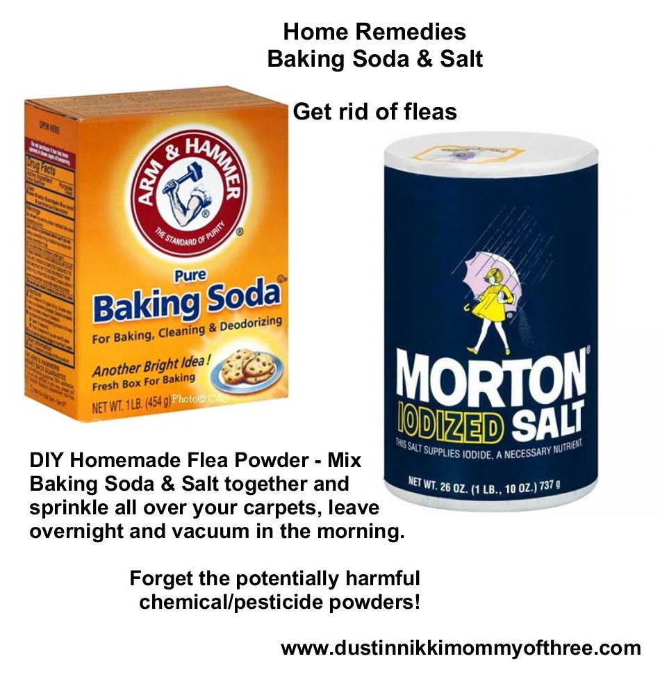 DIY Flea Powder for Your Home – Get Rid of Fleas w/o Using ...
